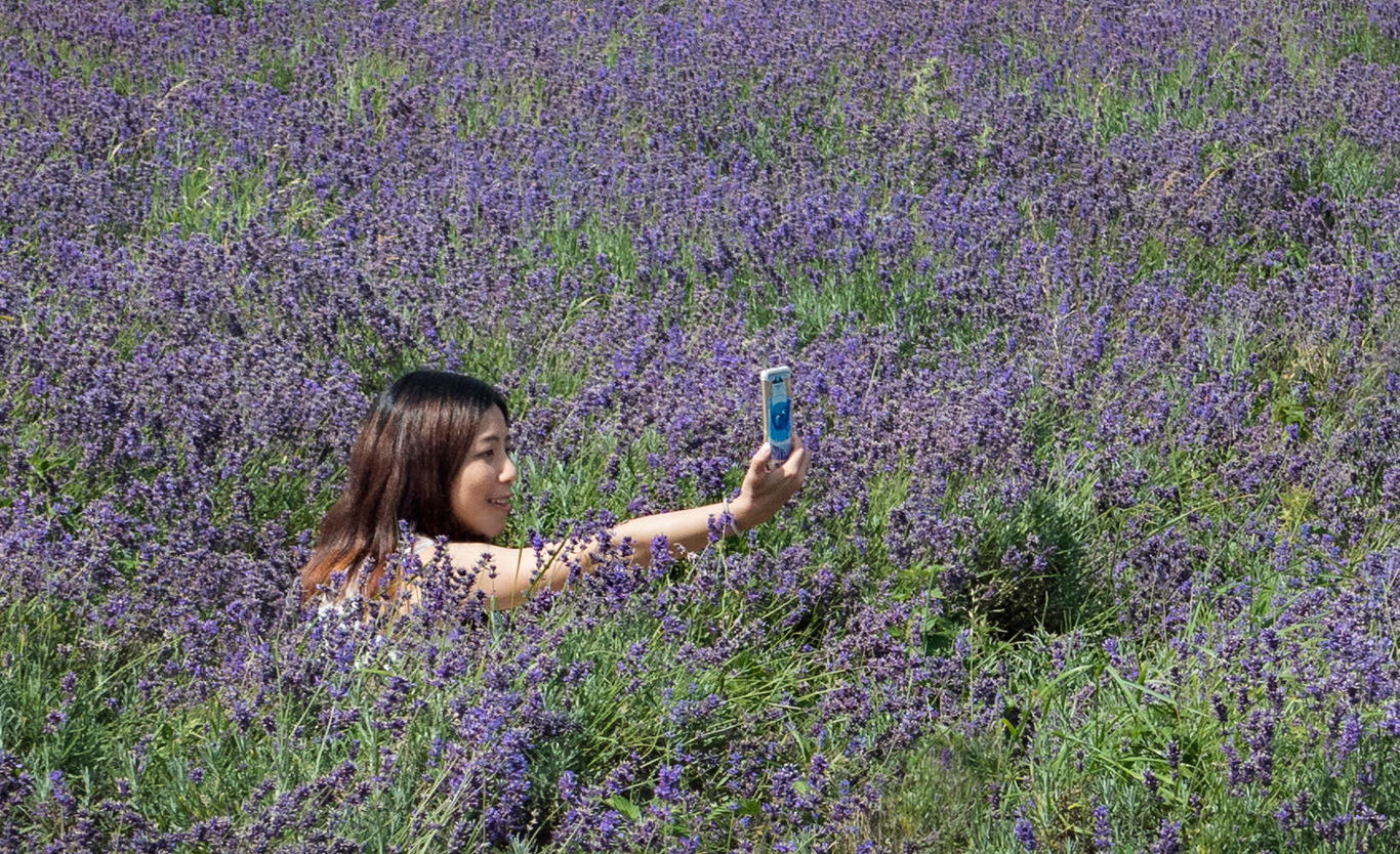 A Lavender-scented Selfie by Czech Conroy sRGB