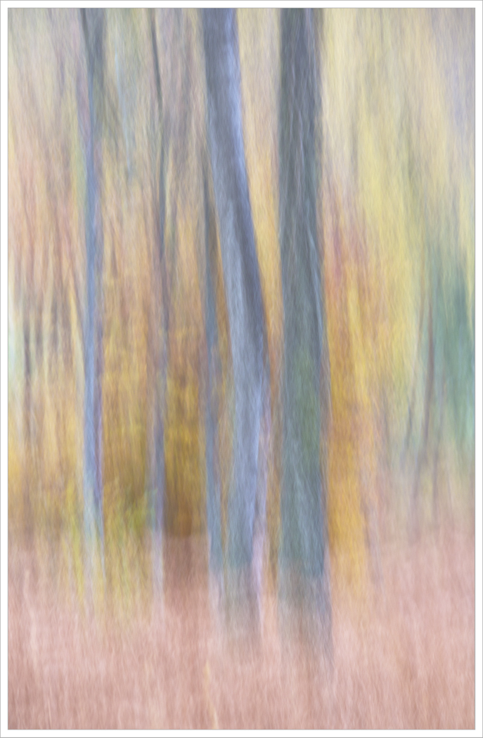 Impressions of trees by Betty Deshmukh LRPS