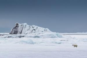 Walking in the Snow by Cheryl Morris