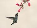 EARLY BIRDS BREAKFAST by Paul Whitmarsh