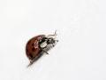 Ladybird by Paul Whitmarsh