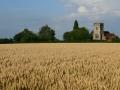 Wheat Fields by Janet Wayman