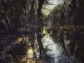 WINTER SUN RELECTIONS by Teresa Davies