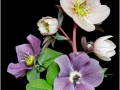 Hellebores by Paul Tipping.jpg