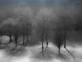 The ghosts of trees by Paul Lehane.jpg