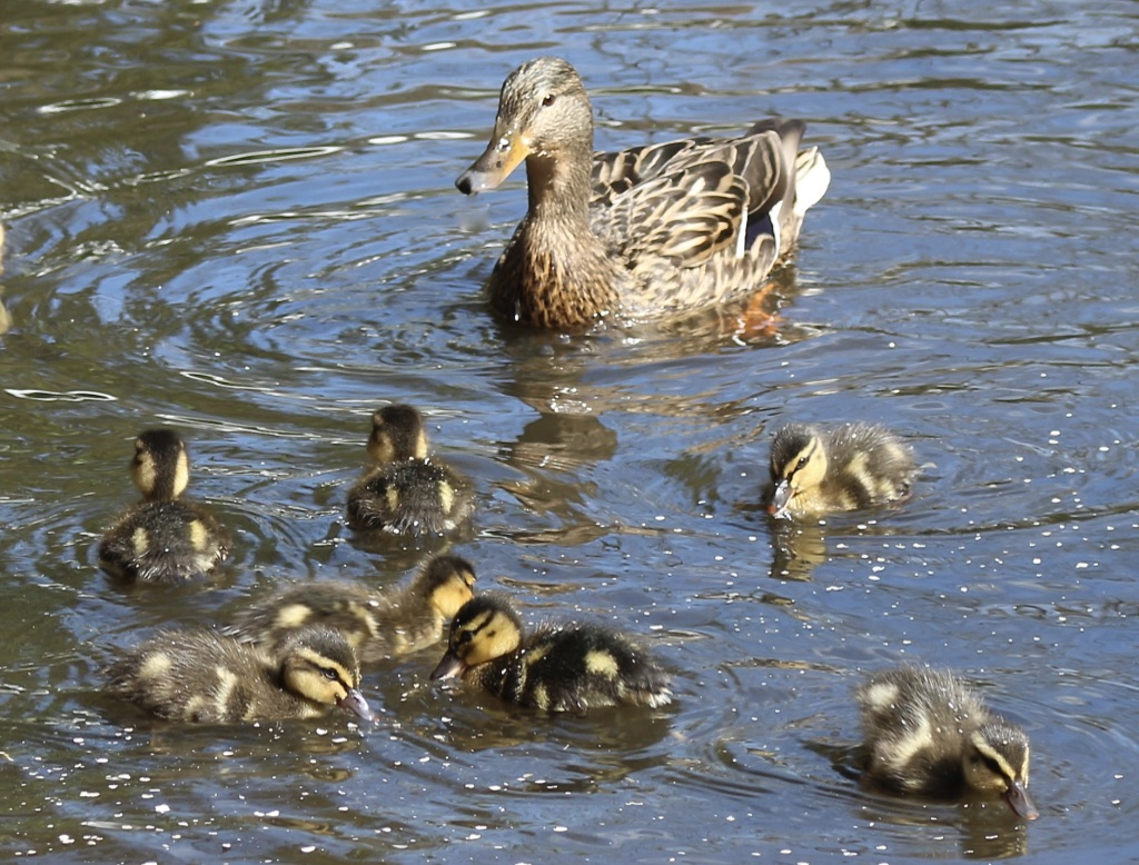 027-Keeping-An-Eye-On-The-Family-by-Brian-Davies