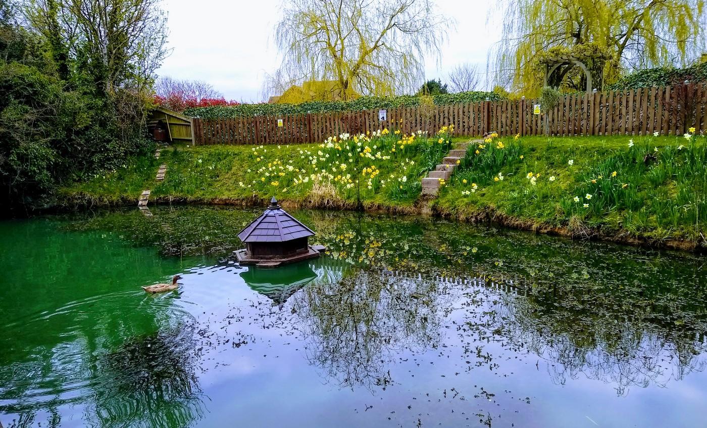 032-The-Duck-Pond-by-Madeleine-Lehane