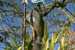 031-Masked-Masai-by-Julie-Langman