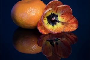 035-Tulip-and-Tangerine-by-Peter-Milton