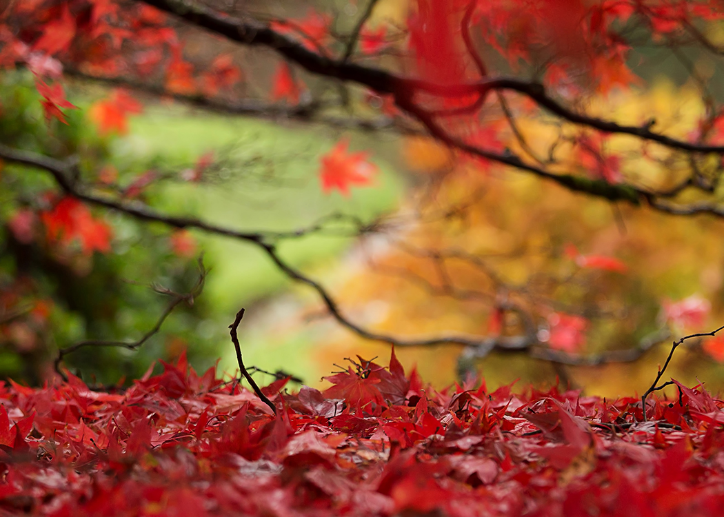 Autumn glory, Sheffield Park by Vera Stevens.jpg