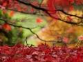 Autumn glory, Sheffield Park by Vera Stevens.jpg