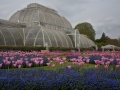The Palm House  by Paul Tipping.jpg