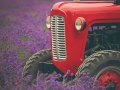 Tractor by Lou Humphries.jpg